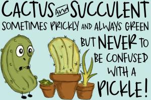Cactus / Succulent SVG Files